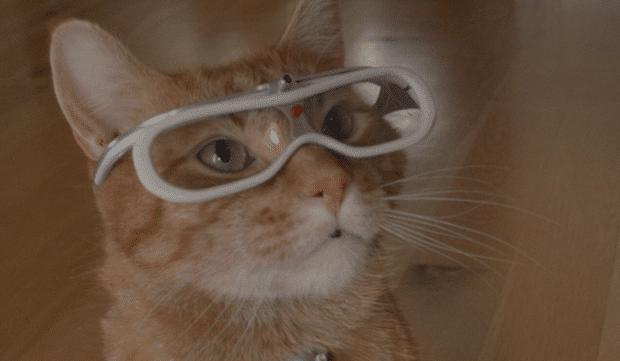NY Times + Morris the Cat